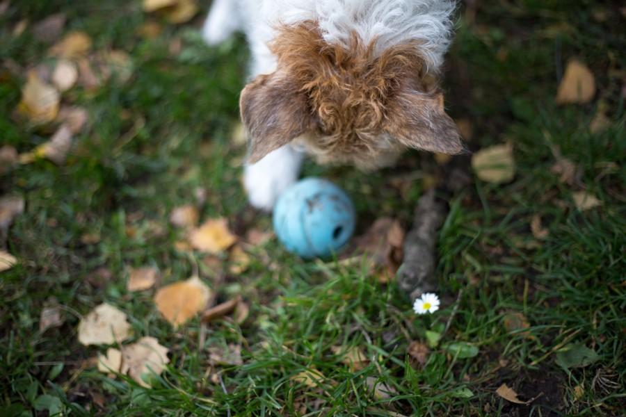 Lucy mit Ball nebst Blume
