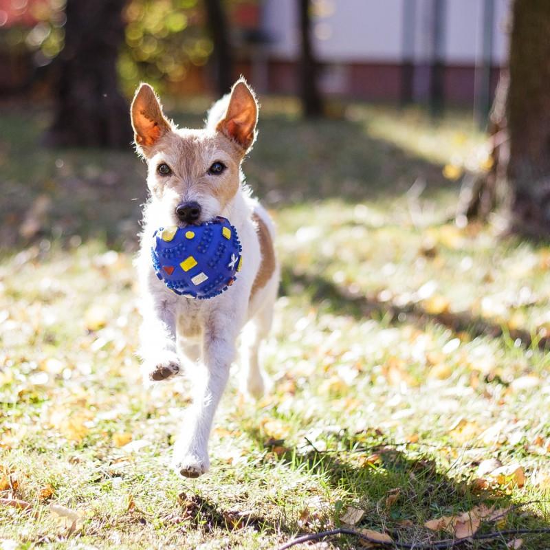 Lucy rennt